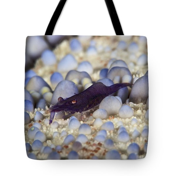 Emporer Shrimp On A Large Pin Cushion Tote Bag by Terry Moore