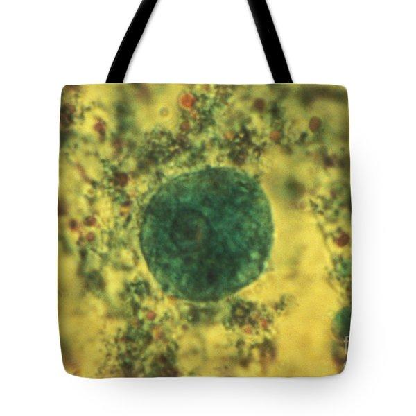 Entamoeba Coli Trophoite Lm Tote Bag by Eric V. Grave