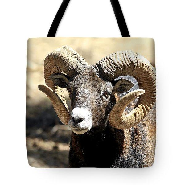 European Big Horn - Mouflon Ram Tote Bag