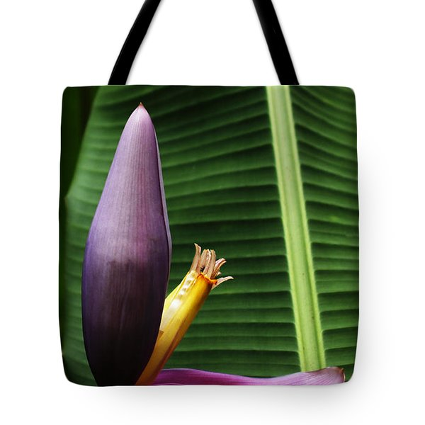 Exploring Light In Nature Tote Bag by Barbara Middleton