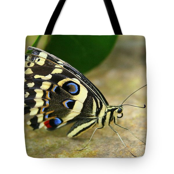 Tote Bag featuring the photograph Eye To Eye With A Butterfly by Laurel Talabere