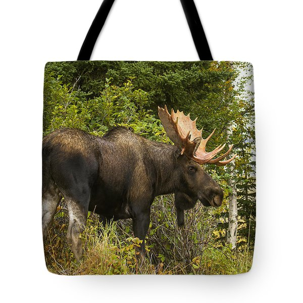 Tote Bag featuring the photograph Fall Bull Moose by Doug Lloyd