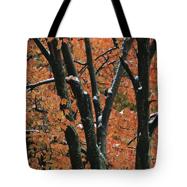 Fall Foliage Of Maple Trees After An Tote Bag by Tim Laman