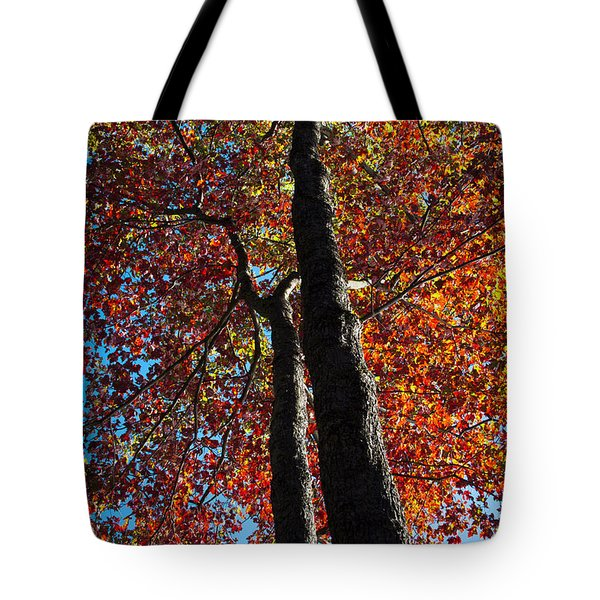 Fall From Above Tote Bag by David Patterson