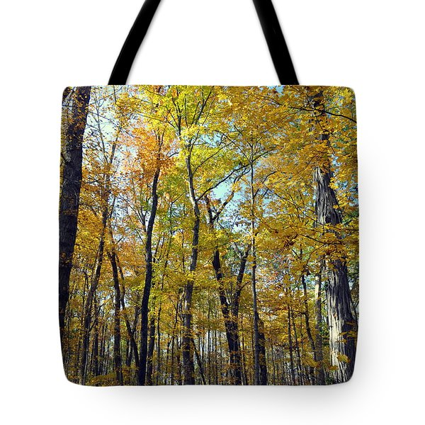 Fall In The Forest 2 Tote Bag by Marty Koch