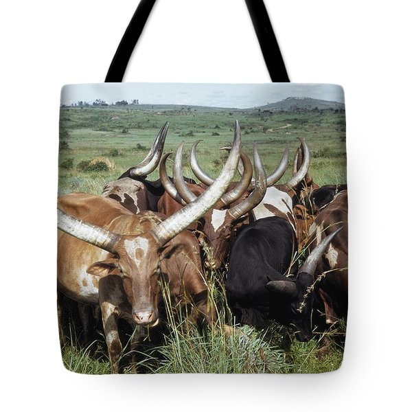 Fantastically Long-horned Ankole Cattle Tote Bag