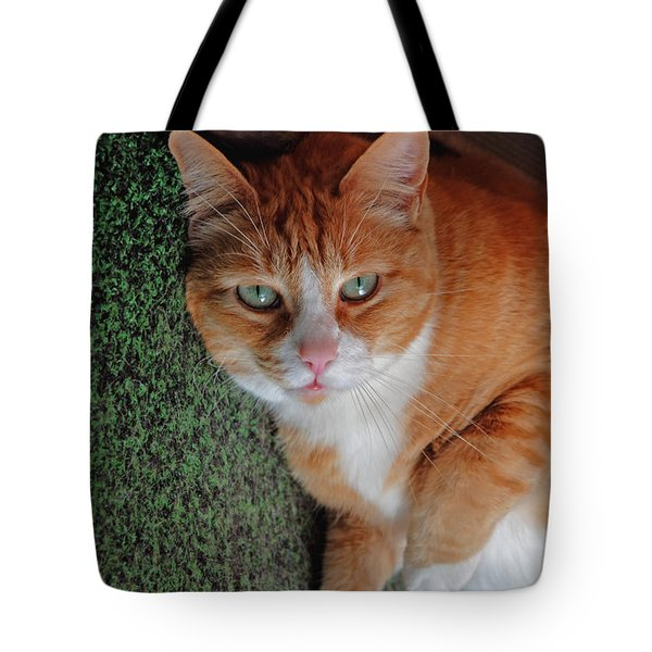 Fat Cats Of Ballard 6 Tote Bag