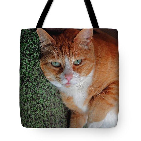 Fat Cats Of Ballard 6 Tote Bag