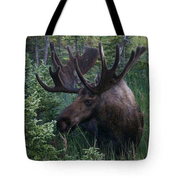 Tote Bag featuring the photograph Feeding Along by Doug Lloyd