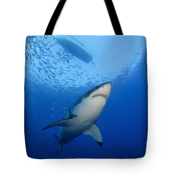 Female Great White, Guadalupe Island Tote Bag by Todd Winner