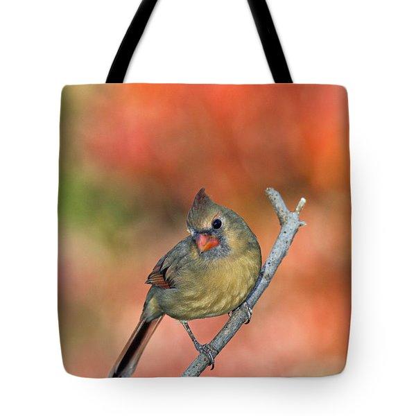 Female Northern Cardinal - D007809 Tote Bag