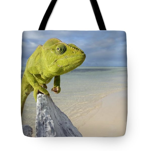 Female Oustalet's Chameleon Tote Bag by Alex Rosenfield and Photo Researchers