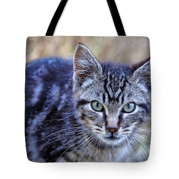 Feral Kitten Tote Bag