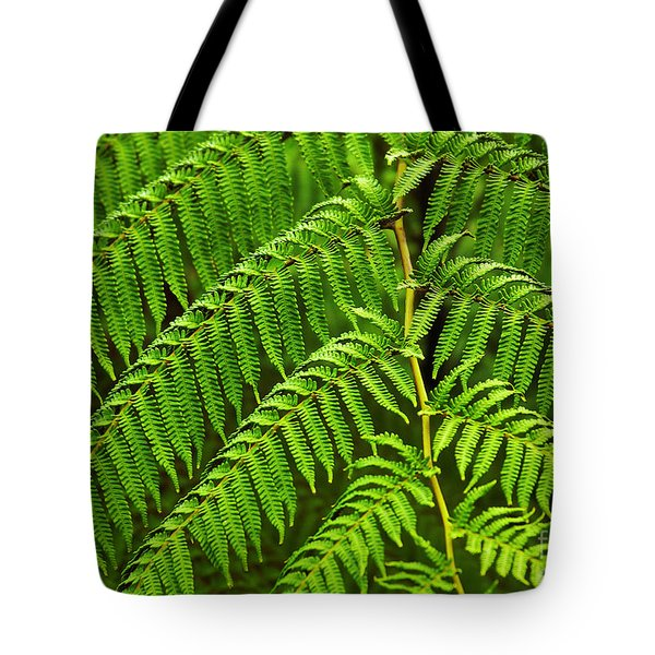 Fern Fronds Tote Bag by Carlos Caetano