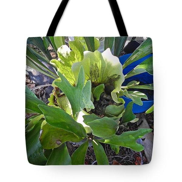 Fern With Blue Bucket Tote Bag by Patricia Greer
