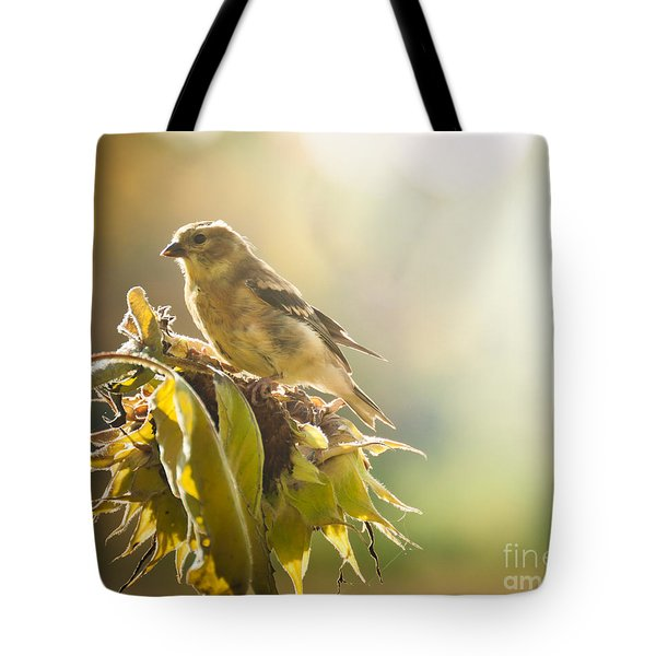 Tote Bag featuring the photograph Finch Aglow by Cheryl Baxter