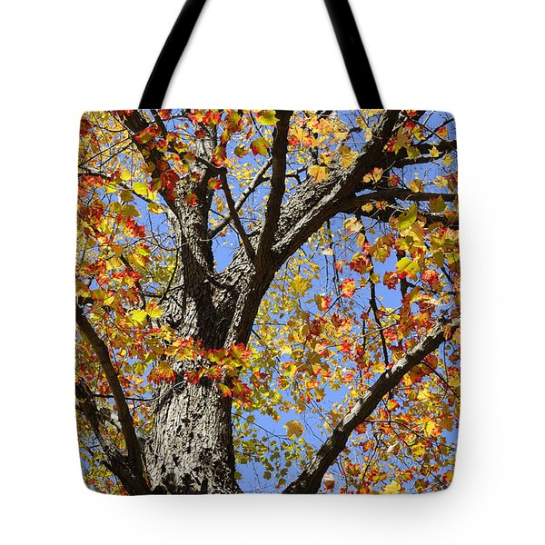 Fire Maple Tote Bag by Luke Moore