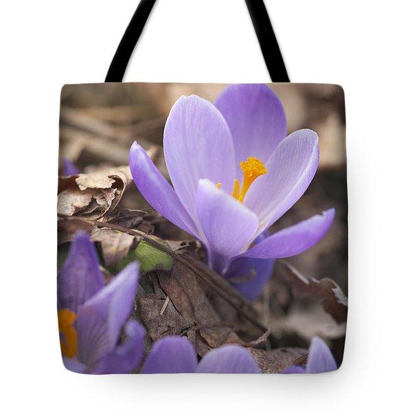 First Crocus Blooms Tote Bag