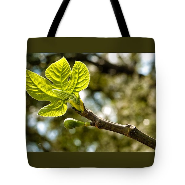 First Leaves And Fig  Tote Bag by Barbara Middleton