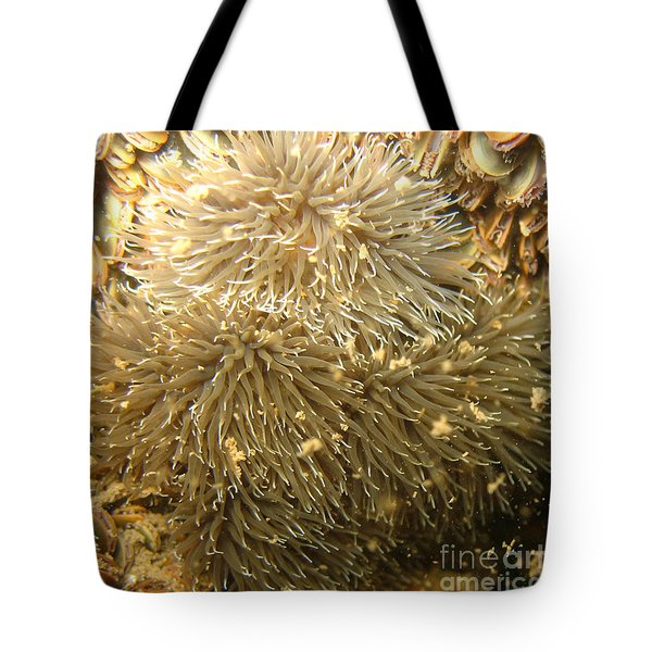 Frilled Sea Anemone Tote Bag by Paul Ward
