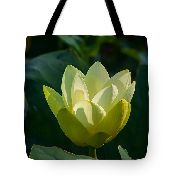 Frog Flowers Tote Bag