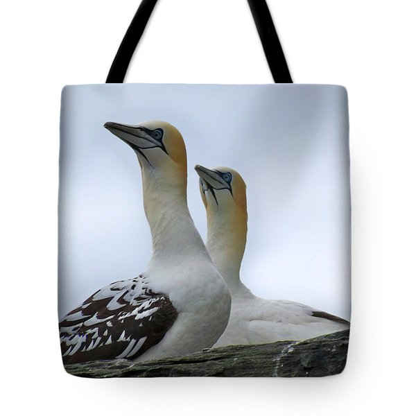 Tote Bag featuring the photograph Gannets by Lynn Bolt