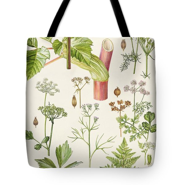 Garden Angelica And Other Plants  Tote Bag by Elizabeth Rice