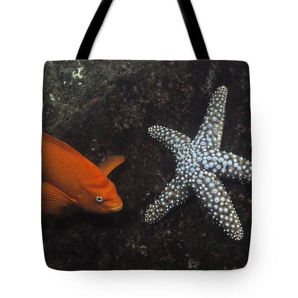 Garibaldi With Starfish Underwater Tote Bag by Flip Nicklin