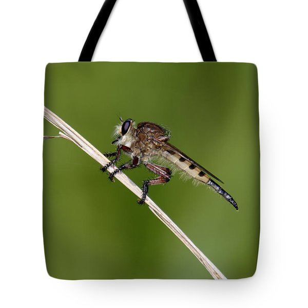 Giant Robber Fly - Promachus Hinei Tote Bag by Daniel Reed