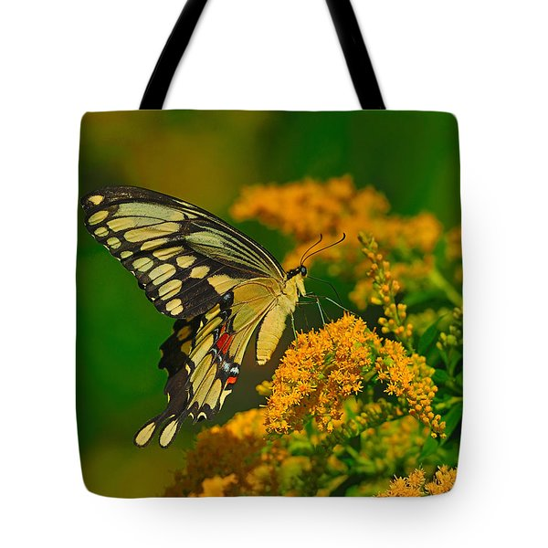 Giant Swallowtail On Goldenrod Tote Bag by Tony Beck