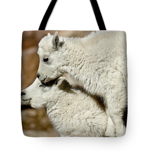 Goat Babies Tote Bag by Colleen Coccia