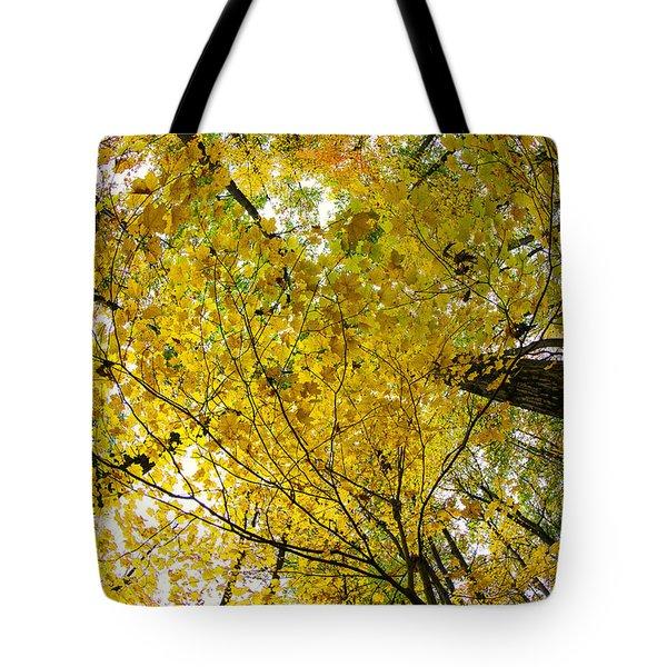 Golden Canopy Tote Bag by Rick Berk