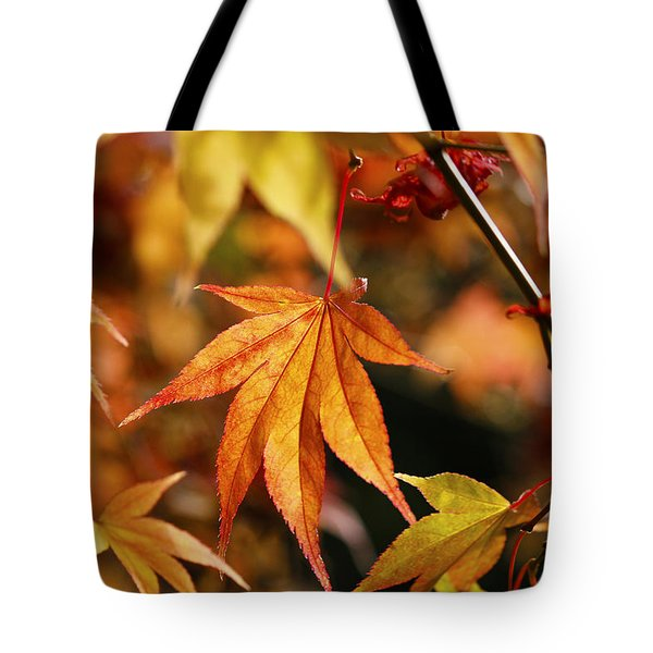 Golden Fall. Tote Bag by Clare Bambers