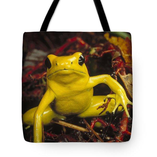 Golden Poison Dart Frog Phyllobates Tote Bag by Mark Moffett