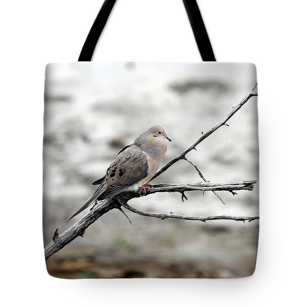 Tote Bag featuring the photograph Good Morning Dove by Elizabeth Winter