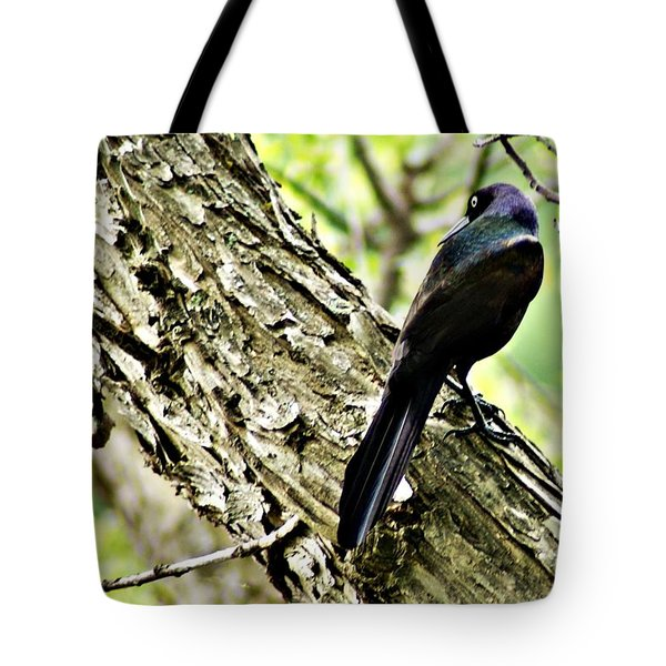 Grackle 1 Tote Bag by Joe Faherty