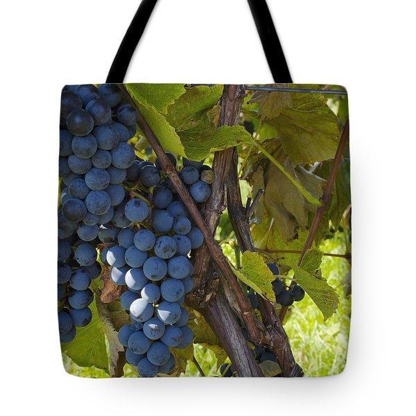 Grapes On A Vine Sutton Junction Quebec Tote Bag by David Chapman