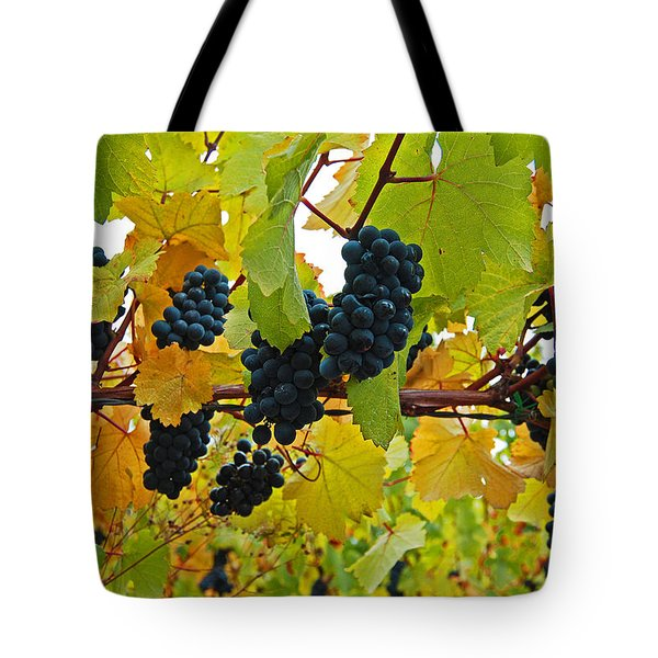 Grapes On The Vine Tote Bag by Jani Freimann