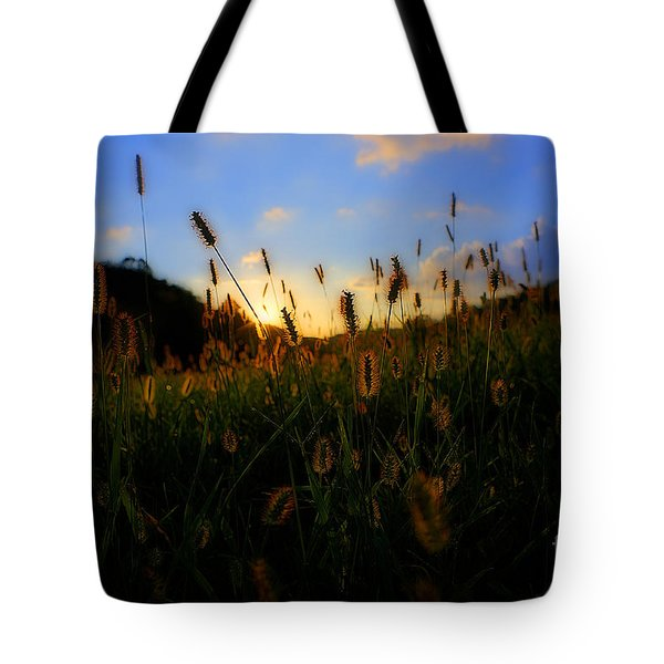 Grass In Field At Sunset Tote Bag by Dan Friend