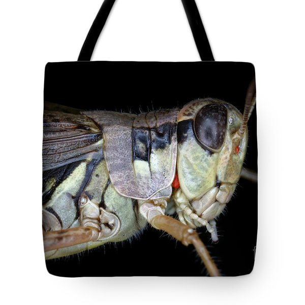 Grasshopper With Parasitic Mite Tote Bag by Ted Kinsman