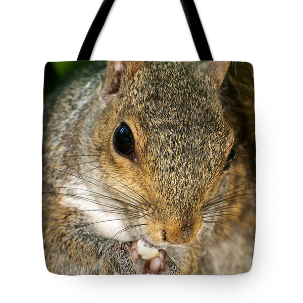 Gray Squirrel Tote Bag by Fabrizio Troiani