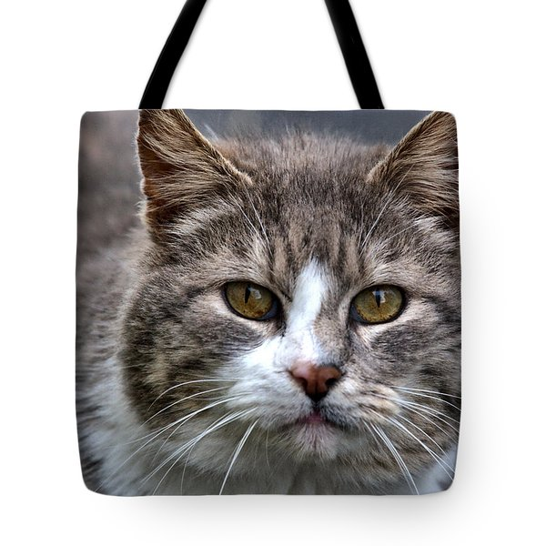 Gray Tabby Tux Cat Tote Bag