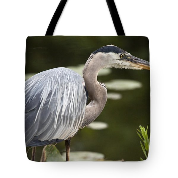 Great Blue Heron  Tote Bag by Jeannette Hunt