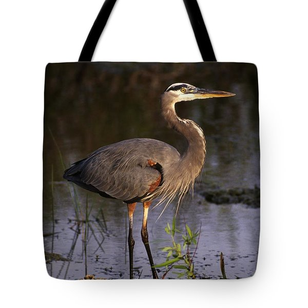 Great Blue Heron Tote Bag by Natural Selection Ralph Curtin