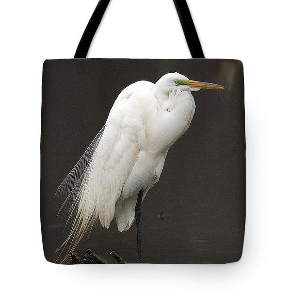 Great Egret Resting Dmsb0036 Tote Bag