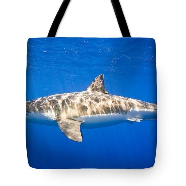 Great White Shark Carcharodon Carcharias Tote Bag by Carson Ganci