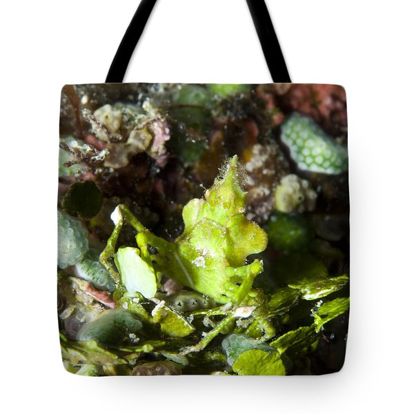 Green Arrowhead Crab, Papua New Guinea Tote Bag by Steve Jones