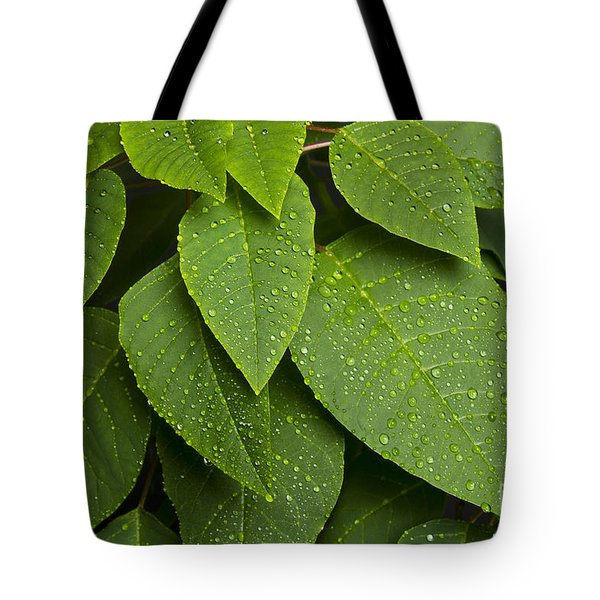 Green Leaves And Water Drops Tote Bag by James BO  Insogna