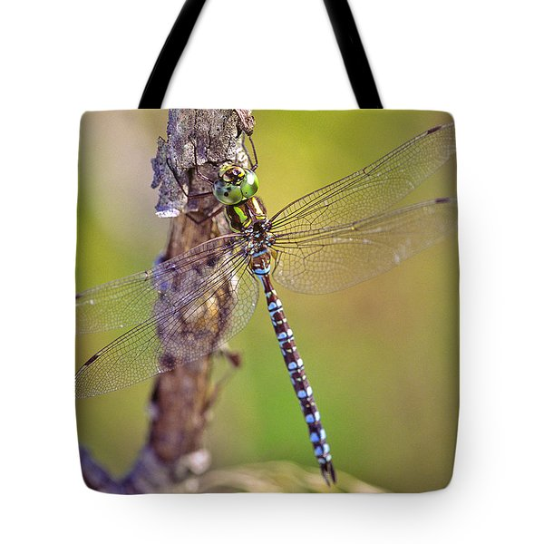 Green-striped Darner Dragonfly Tote Bag