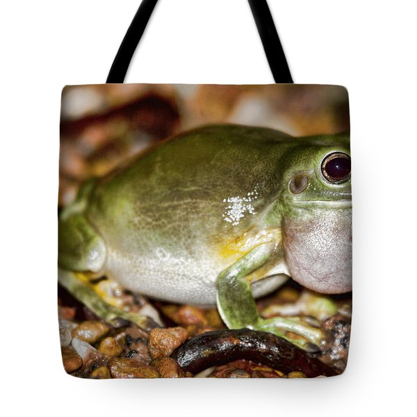 Green Tree Frog Tote Bag by Douglas Barnard